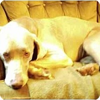 Adopt A Pet :: Bailey - Attica, NY