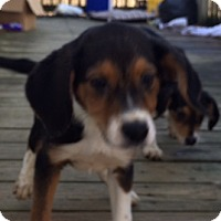 Adopt A Pet :: Wyatt - Staunton, VA