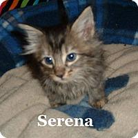 Adopt A Pet :: Serena - Bentonville, AR
