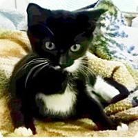 Adopt A Pet :: Nemo - Edmonton, AB