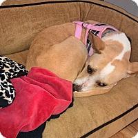Adopt A Pet :: Princess - Chicago, IL