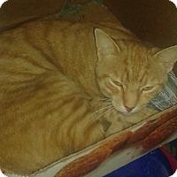 Adopt A Pet :: Henry - Whittier, CA