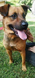 Mountain Cur Mix Dog for adoption in Corbin, Kentucky - Lucas
