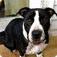 Adopt A Pet :: LALA-Potential Emotional Support Animal - DeLand, FL
