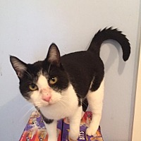 Adopt A Pet :: Lucky - Transfer, PA