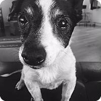 Adopt A Pet :: Julia - Homewood, AL