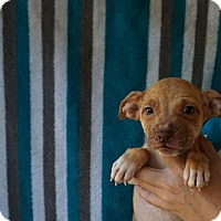 Adopt A Pet :: Aspen - Oviedo, FL