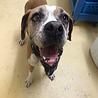 Adopt A Pet :: Earliana - Austin, TX