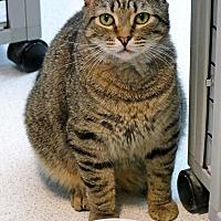 Adopt A Pet :: Napoleon - Victor, NY