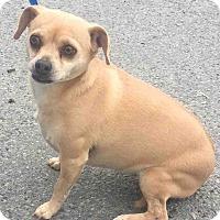 Adopt A Pet :: Michaela - Loudonville, NY