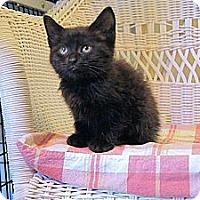 Adopt A Pet :: Brenna - Victor, NY