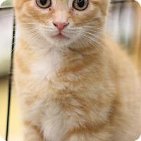 Adopt A Pet :: Oliver - Sacramento, CA