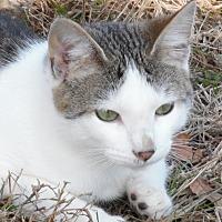 Adopt A Pet :: Auggie - Melbourne, AR