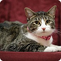 Adopt A Pet :: Calissa - The Colony, TX