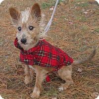 Adopt A Pet :: Hughie - Port Jervis, NY