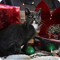 Adopt A Pet :: Kris Kringle - Palmdale, CA