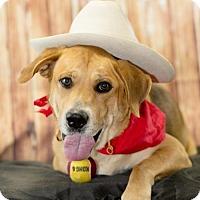 Adopt A Pet :: Maverick - Scarborough, ME