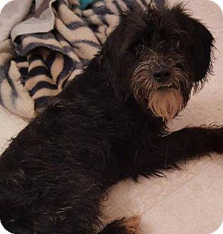 Shepherd (Unknown Type)/Hound (Unknown Type) Mix Puppy for adoption in Hope Mills, North Carolina - Dover