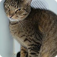 Adopt A Pet :: Zeb - Hamburg, NY