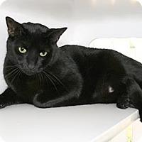 Adopt A Pet :: Harley - Bradenton, FL