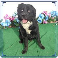 Adopt A Pet :: RAYITO see also PRINCESS - Marietta, GA
