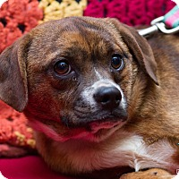 Adopt A Pet :: Sadie - Evansville, IN