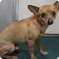 Adopt A Pet :: Luke - Middlebury, CT