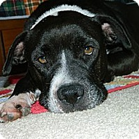 Adopt A Pet :: NYSA - Jacksonville, FL