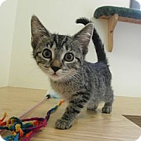Adopt A Pet :: Mahlia - IN FOSTER CARE - Milwaukee, WI