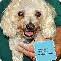 Adopt A Pet :: Mat - Franklinton, NC
