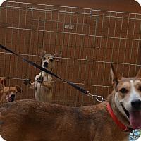 Adopt A Pet :: Sangria - Scottsdale, AZ