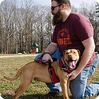 Adopt A Pet :: Maynard - Midlothian, VA