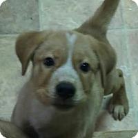 Adopt A Pet :: Lonnie - House Springs, MO