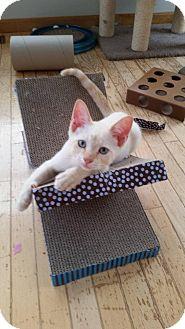 Domestic Shorthair Kitten for adoption in Evans, West Virginia - Lyndon