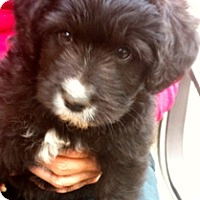 Adopt A Pet :: Nemo - Simi Valley, CA