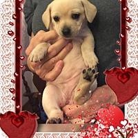 Adopt A Pet :: Tiana - Lodi, CA