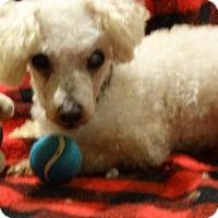 Adopt A Pet :: Miss Maple - Vacaville, CA