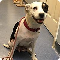Adopt A Pet :: Opal - Jupiter, FL