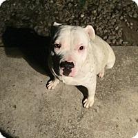 Adopt A Pet :: Betty - Sacramento, CA