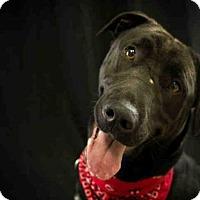 Adopt A Pet :: ZARA - McKinleyville, CA