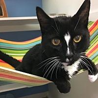 Adopt A Pet :: Rudy - Novato, CA
