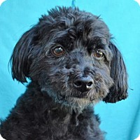 Adopt A Pet :: Wesley - Visalia, CA