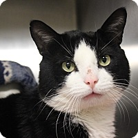 Adopt A Pet :: Henry - Middletown, CT