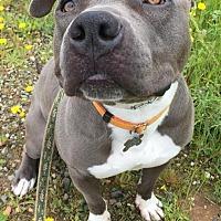 Adopt A Pet :: Steele - Lincoln, CA