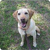Adopt A Pet :: Sis - Altmonte Springs, FL