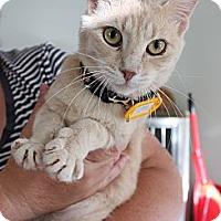 Adopt A Pet :: Caramel - Orillia, ON