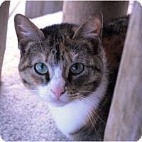 Adopt A Pet :: Cher - Lunenburg, MA