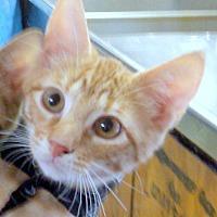 Adopt A Pet :: Emma - Madisonville, LA