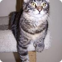 Adopt A Pet :: K-Hirsh7-Clawdius - Colorado Springs, CO