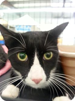 Adopt A Pet :: Chester  - Waxhaw, NC
